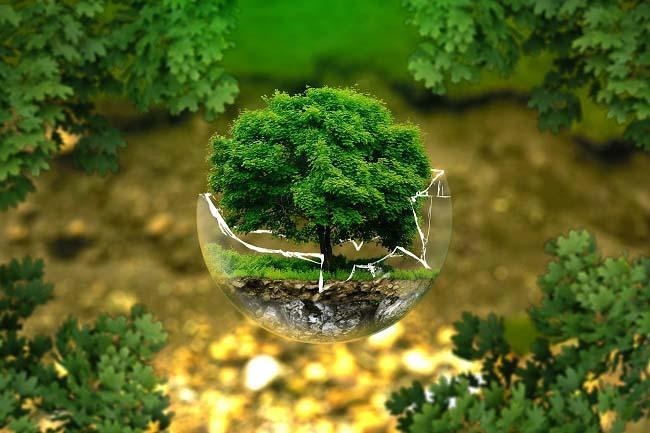 Mañana se celebra el Día Mundial de la Educación Ambiental