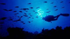 Buceador bajo las aguas azules de Fuerteventura