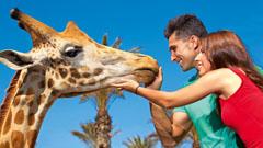 Turistas visitando el Fuerteventura Oasis Park